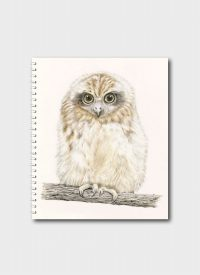Southern Boobook Owl Chick By Sandi Rigby
